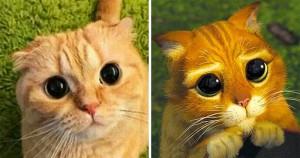 28 Hilarious Photos Proving Cats Are Brilliant Actors
